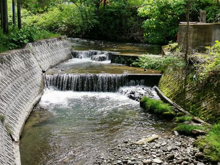 渓流釣り今年度2度目の釣行。渓流釣りの時に重要視していること。 #八幡平市 #渓流釣り #ロケーション