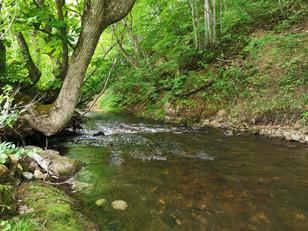 馬淵川水系 鍋越川