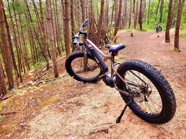 Fat Bike Electrique dans la forêt domaniale des Pays de Monts - Vélivélo, location de vélo en Vendée