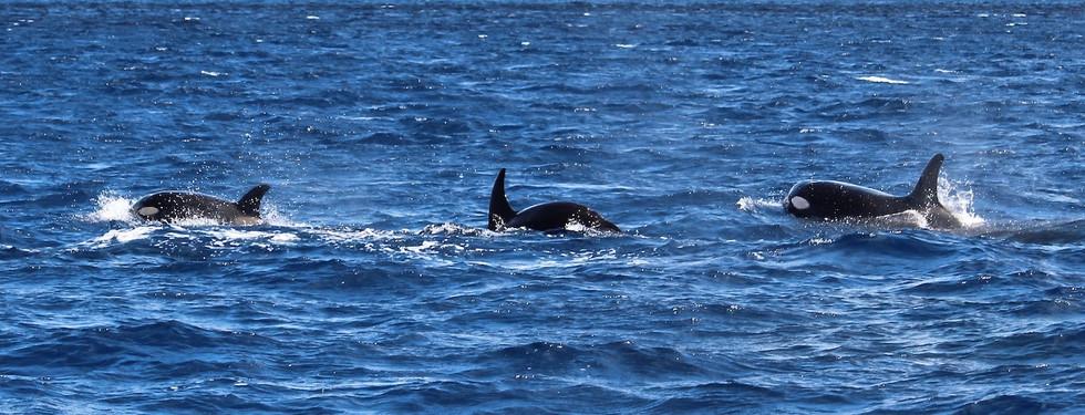 PDI - Orca by Elizabeth Marsh (9 marks)