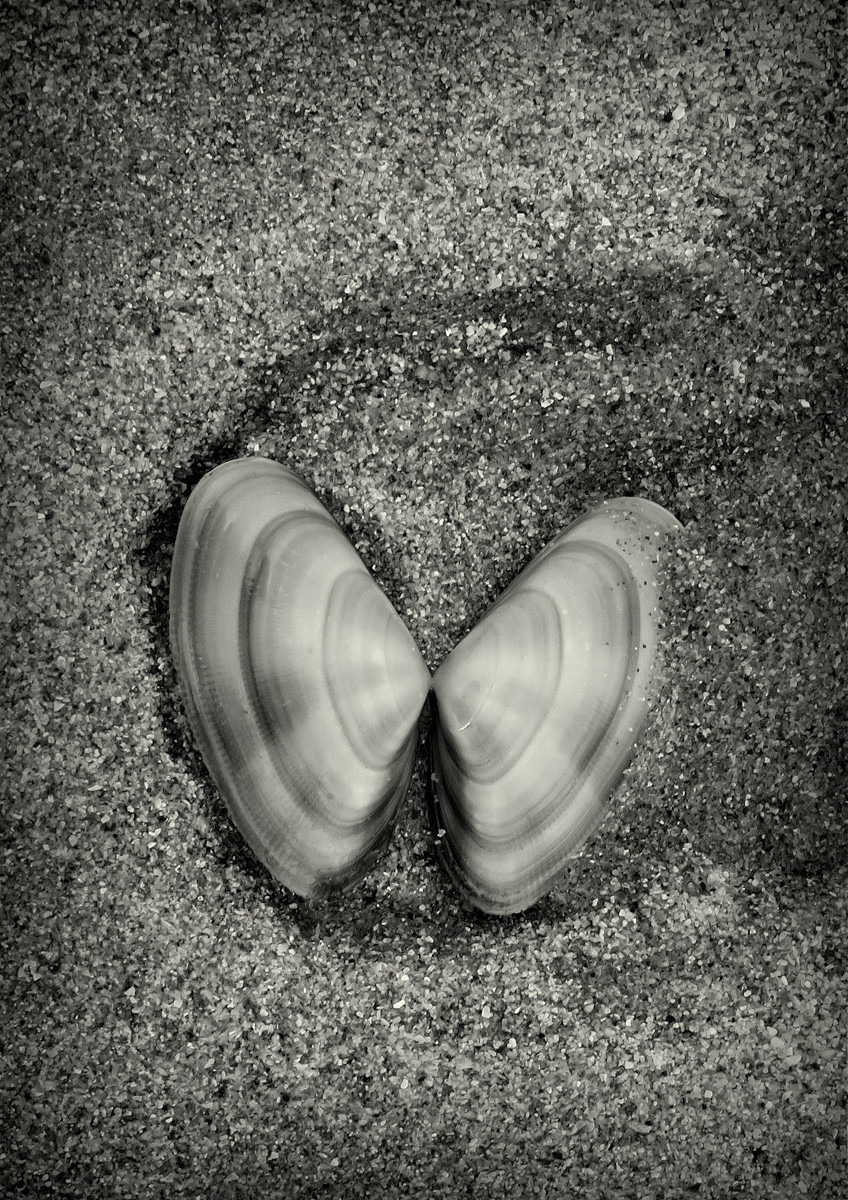 MONO - Sea Shell in the Sea Shore by Alan Thompson (9 marks)
