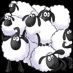 Moutons FCE