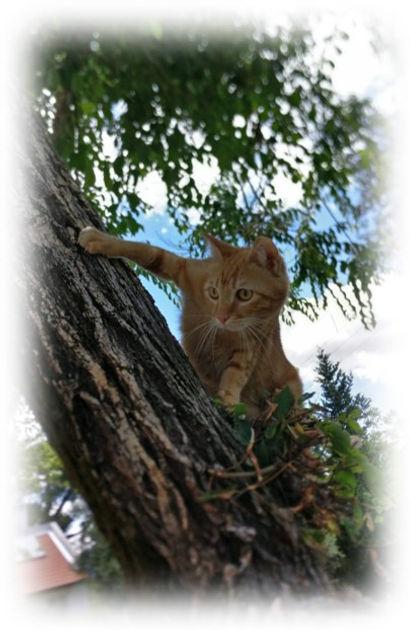 אוליבר על העץ.jpg