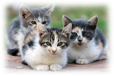 חתולים לרקע.jpg