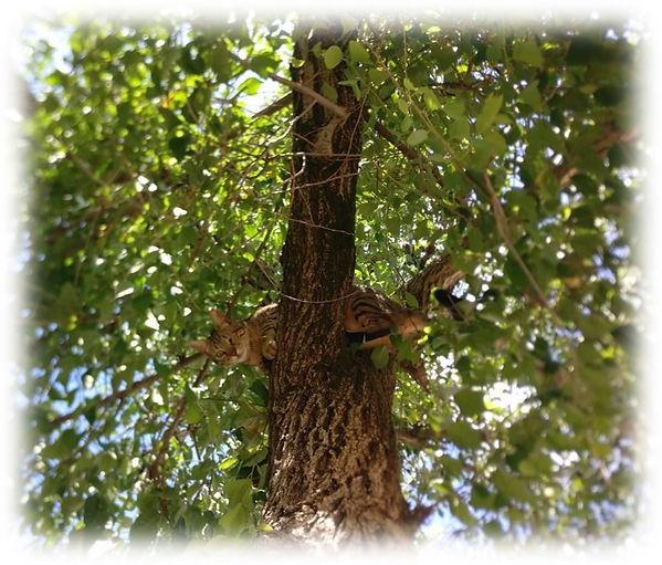 מיקו על העץ.jpg