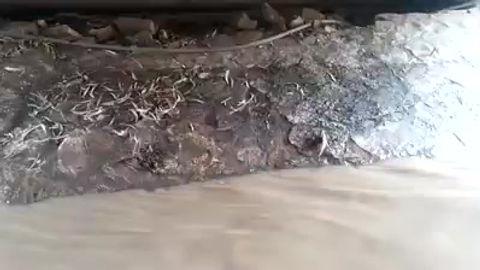 גורים תקועים בנחל הגעתון שעלה על גדותיו
