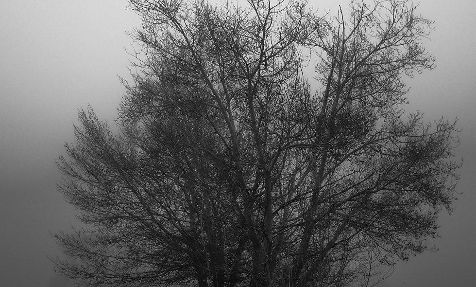 Winter's Morning Print 37