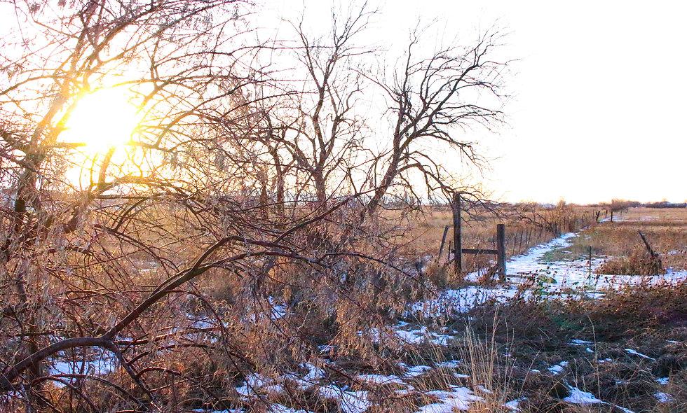 Winter's Morning Print 34