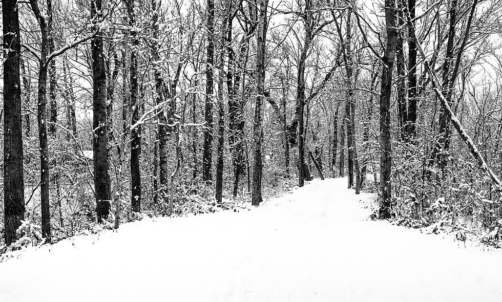 Winter's Morning Print 1 -18 x 24