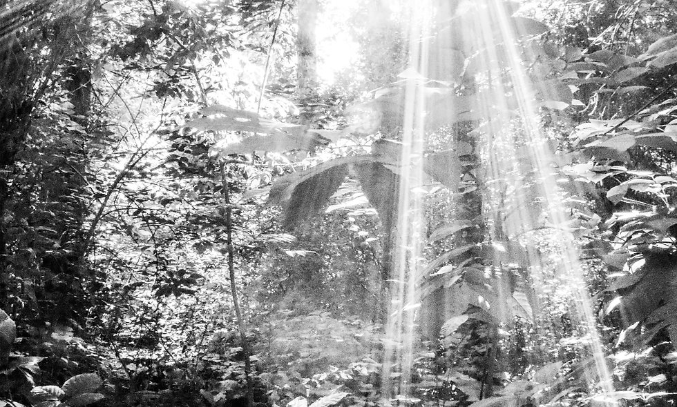 Sparks of Light Print 39