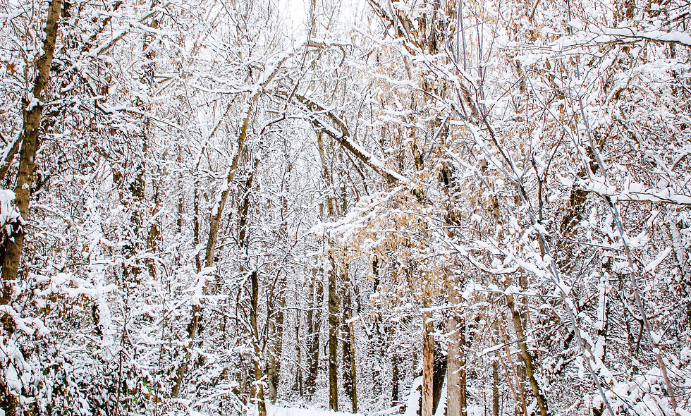 Winter's Morning Print 16