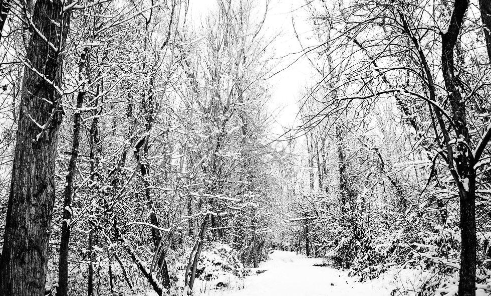 Winter's Morning Print 21
