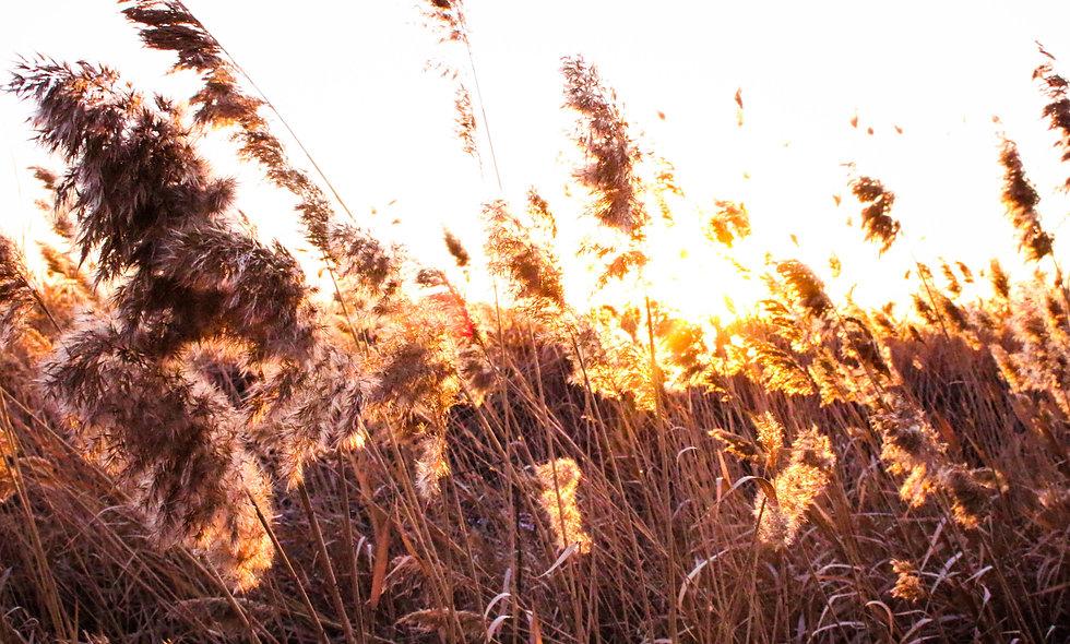Sparks of Light Print 7