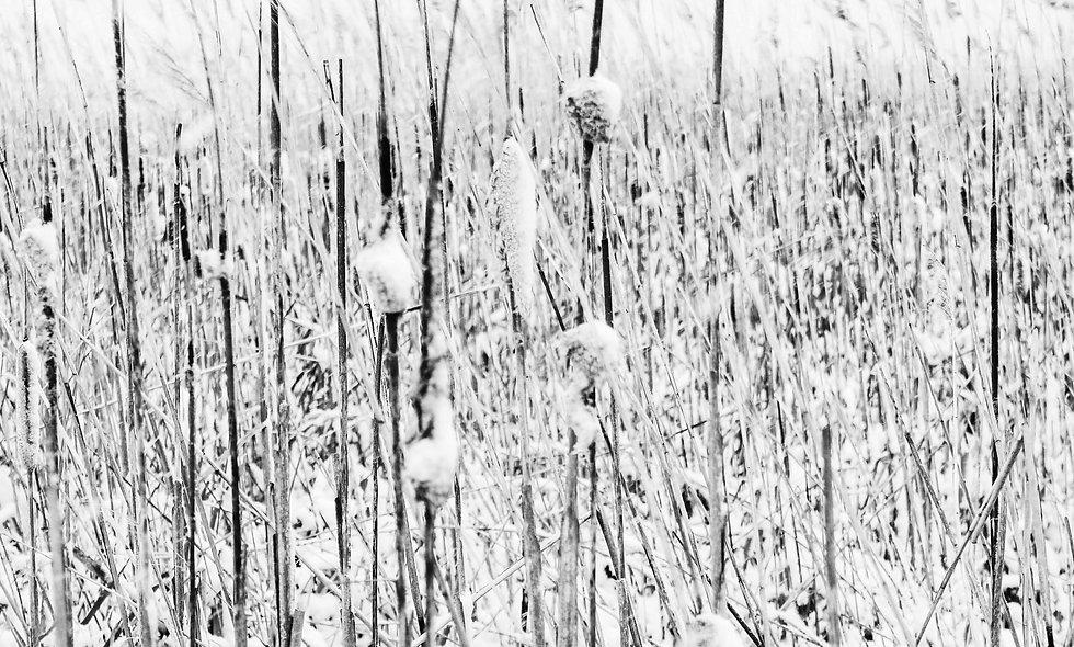 Winter's Morning Print 51
