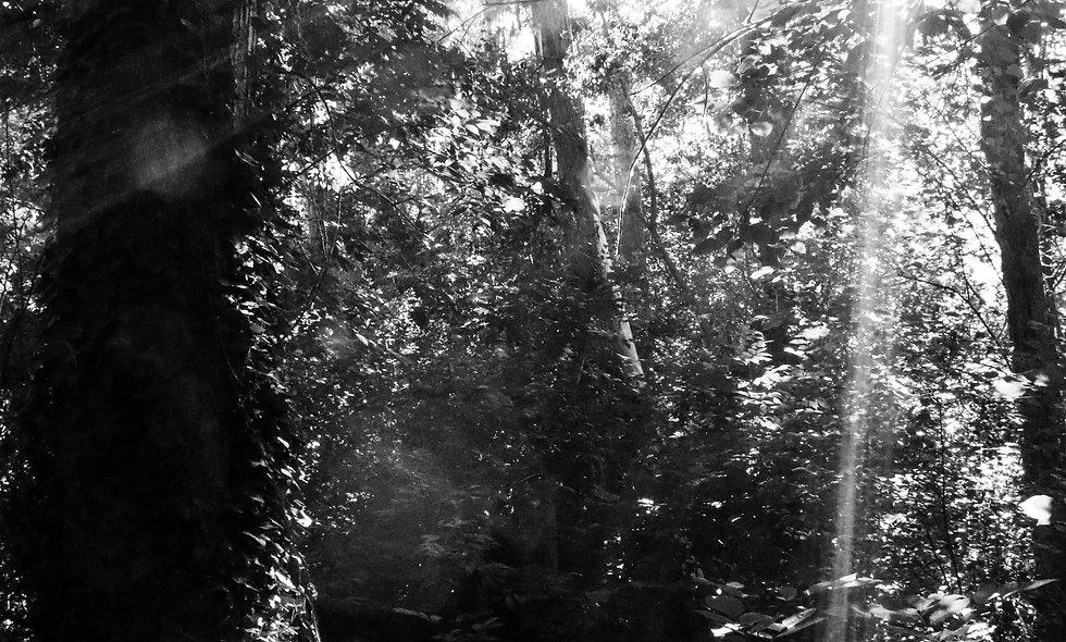Sparks of Light Print 41