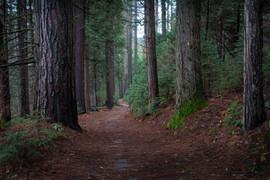 treepath.jpg