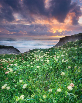 san gregorio state beach at sunset after