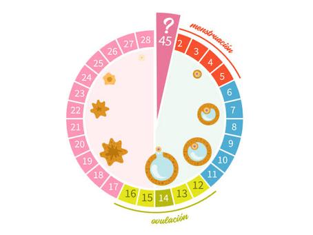 Ciclo menstrual y la alimentación
