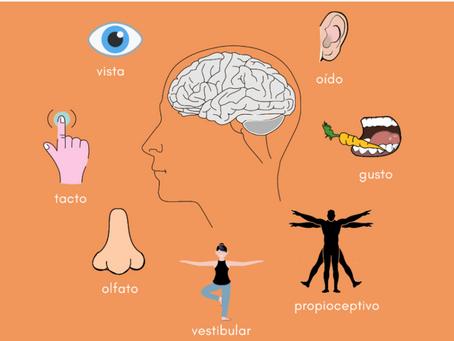 Terapia de Integración Sensorial ¿Qué es?