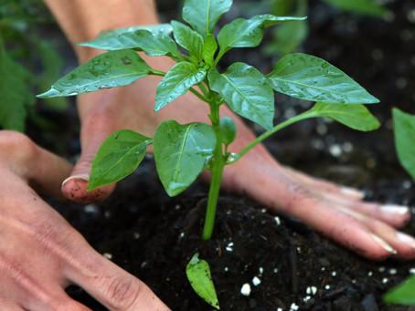 Online Gardening