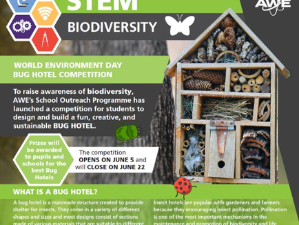 Bug Hotel Competition