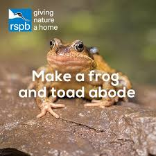 Make A Frog And Toad Abode