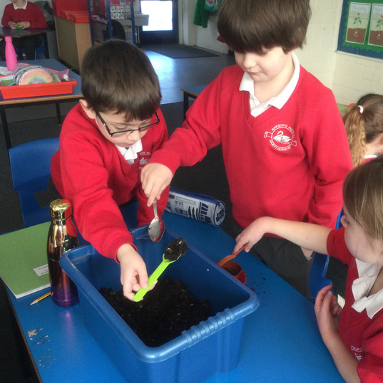 Cress Experiment - testing the best growing conditions