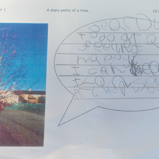 Eco Project - School Grounds, Diary Of A Tree