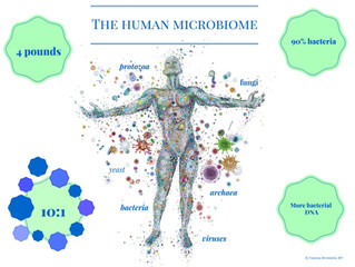 Building a Healthy Microbiome