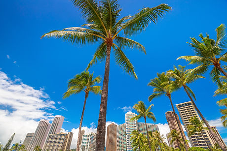 Honolulu city skyline with palm trees. H