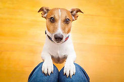 cute-dog-1.jpg