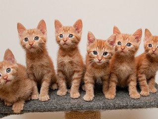 HOW WELL DO YOU KNOW YOUR ORANGE CAT?