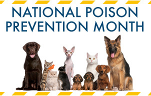 Protect Your Cat from Poisons
