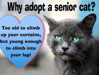 CONSIDER ADOPTING A SENIOR CAT