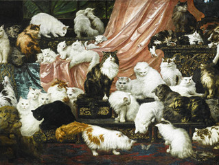 $826,000 WORTH OF CATS