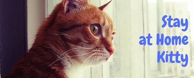 Cat Sitter | Kitchener-Waterloo