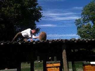 De bijen van Wim of: Het ware wezen van de imme