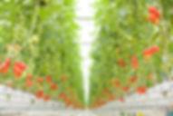 菜園プランテーション (1).jpg