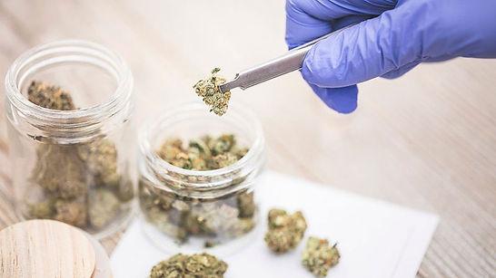 cannabis usada nos eua.jpg