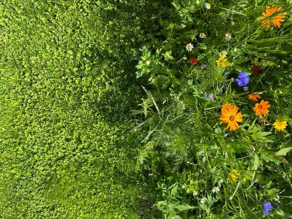 bloemenweide ecologisch