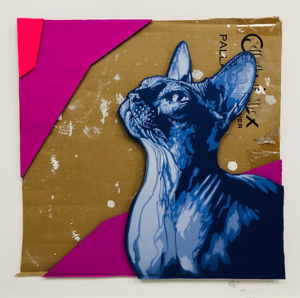 Viza «Cool cat»
