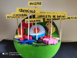 """Los alumnos de 1ºESO realizan el proyecto """"Construye tu célula"""" en clase de Biología y Geología"""