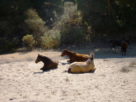 Healing Horses Naturally - Part 1