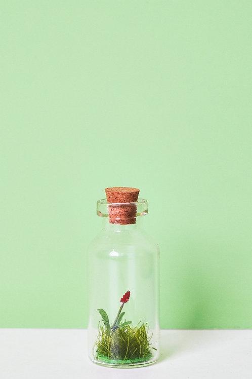 Nature Celebration in a Bottle
