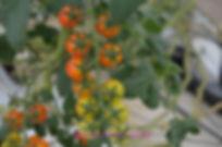 El Dorado's own 700,000 ft greenhouse