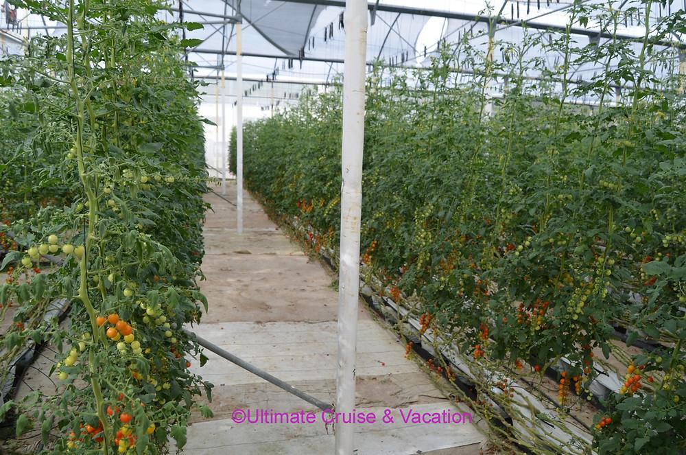Greenhouse at El Dorado Royale