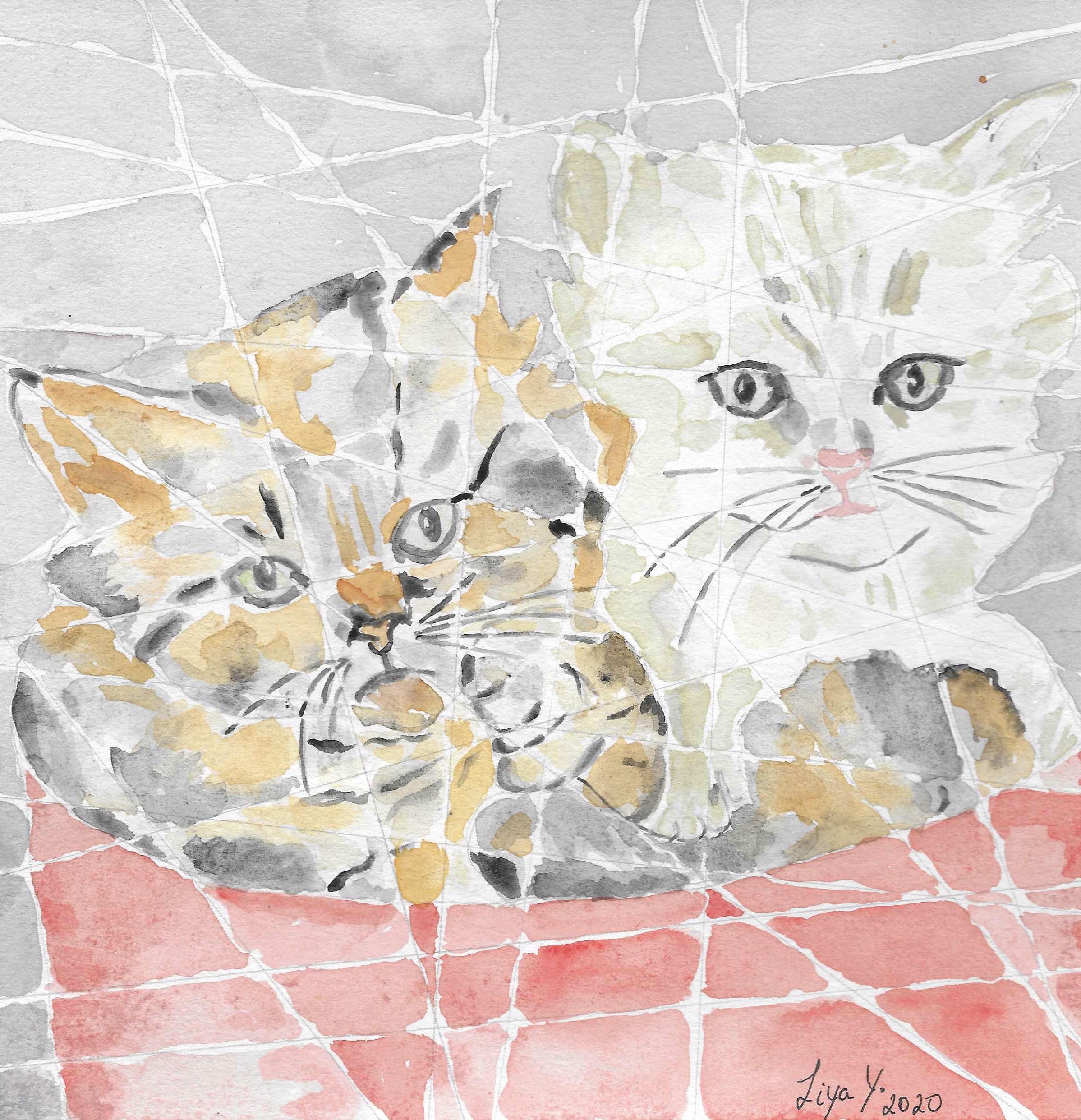 Cats-PRINTS