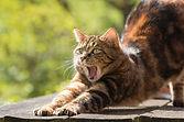 cat-814952_1920.jpg