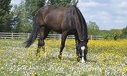 horse-5135254_1920.jpg
