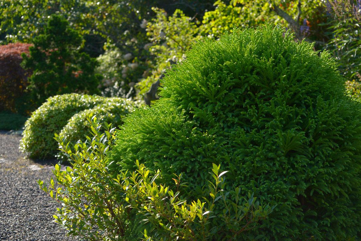 amagansett greenery